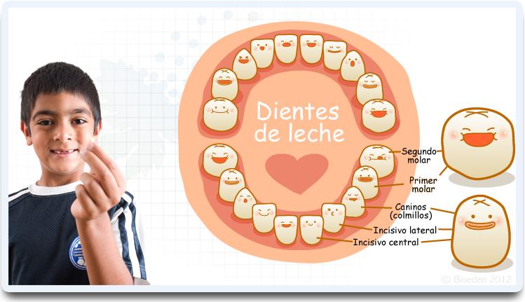 dientes de leche a: