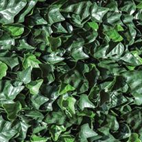 Cersís Verde
