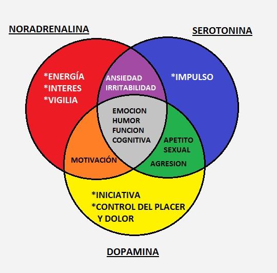Que es la serotonina dopamina y noradrenalina